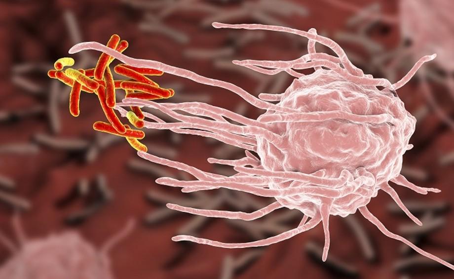 Astragalus zwiększa odporność i wykazuje działanie przeciwwirusowe